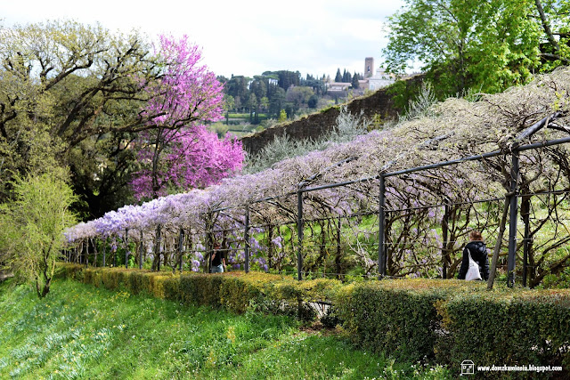 Florencja ogród Bardini