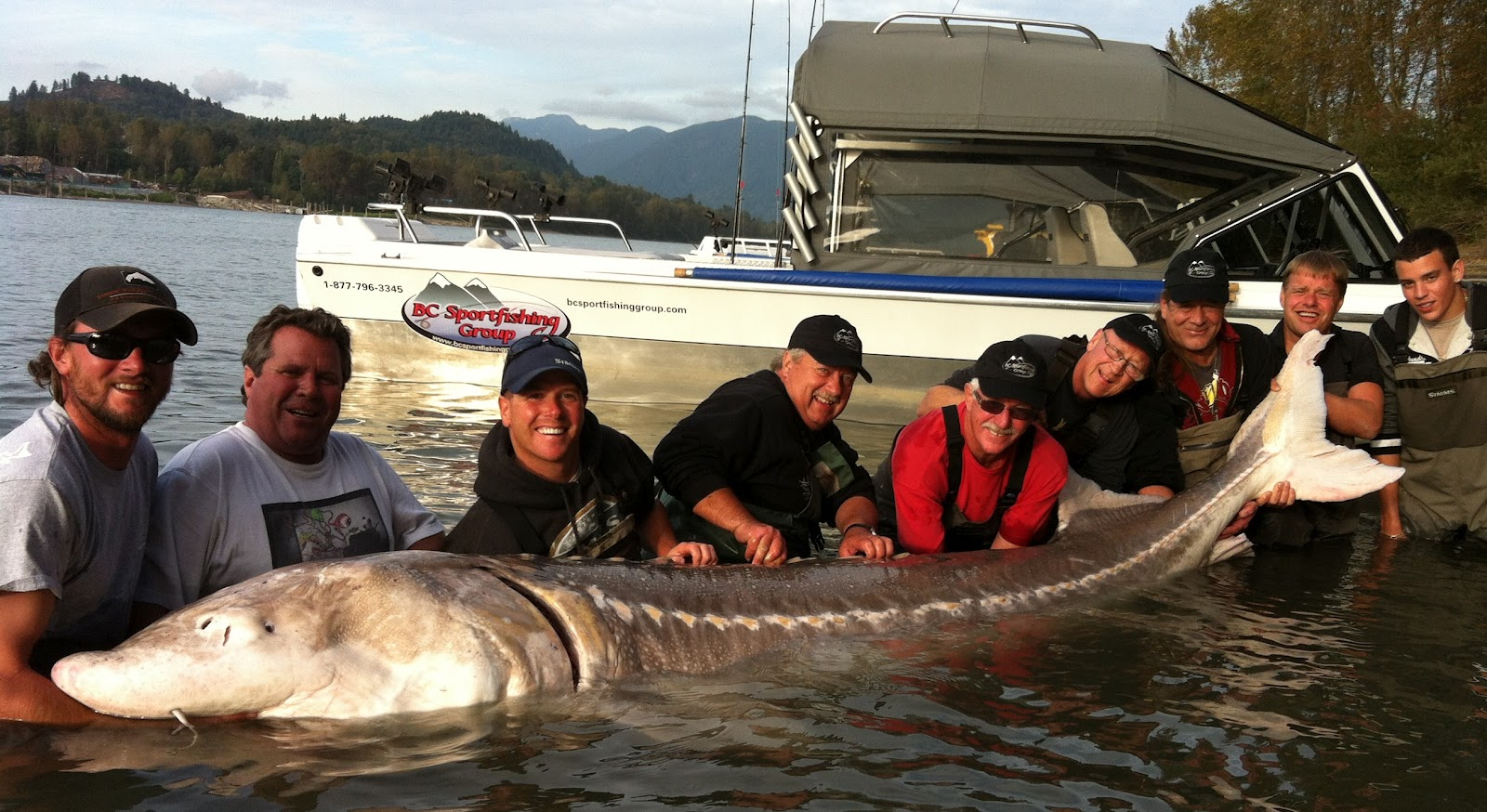 Largest fish on the Fraser in 2012!!!! - Sturgeon & Salmon ...