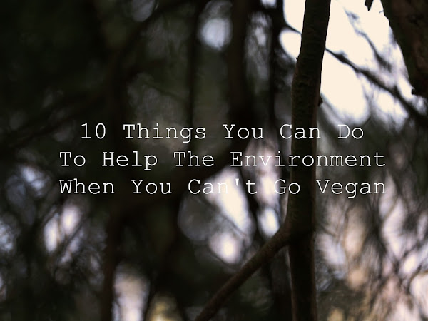 10 Things You Can Do To Help The Environment When You Can't Go Vegan