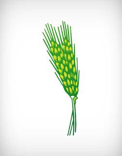wheat vector, crop vector, bakery vector, flour vector, crop vector, barley vector, গম, wheat vector ai, wheat vector eps, wheat vector png, wheat vector svg