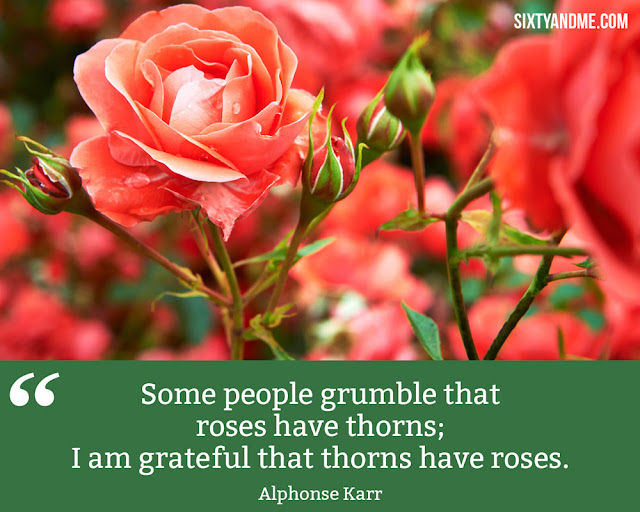 Thorns have roses-How to Fuel Your Life with Gratitude to Enjoy More
