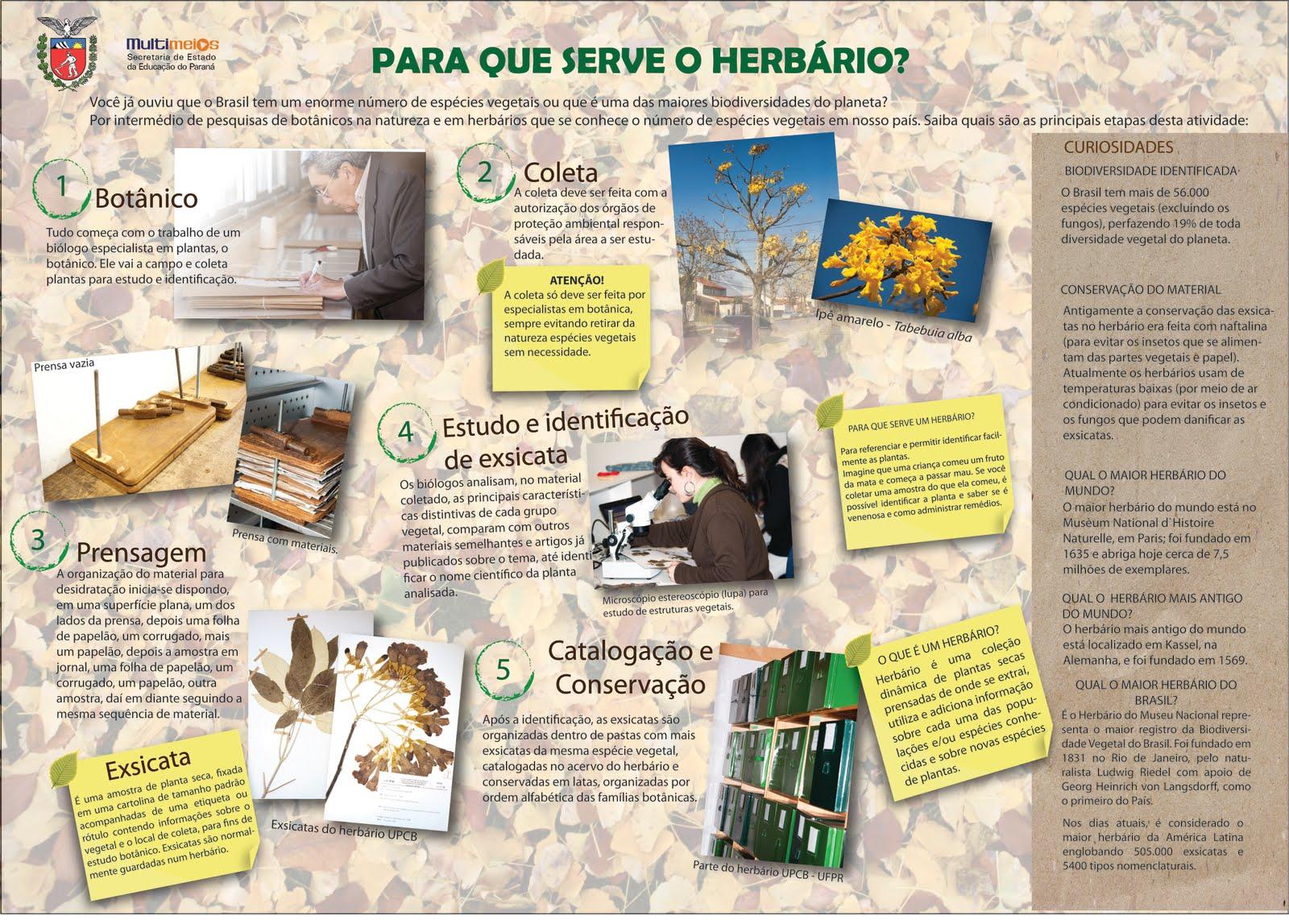 Para Que Serve Um Herbário?