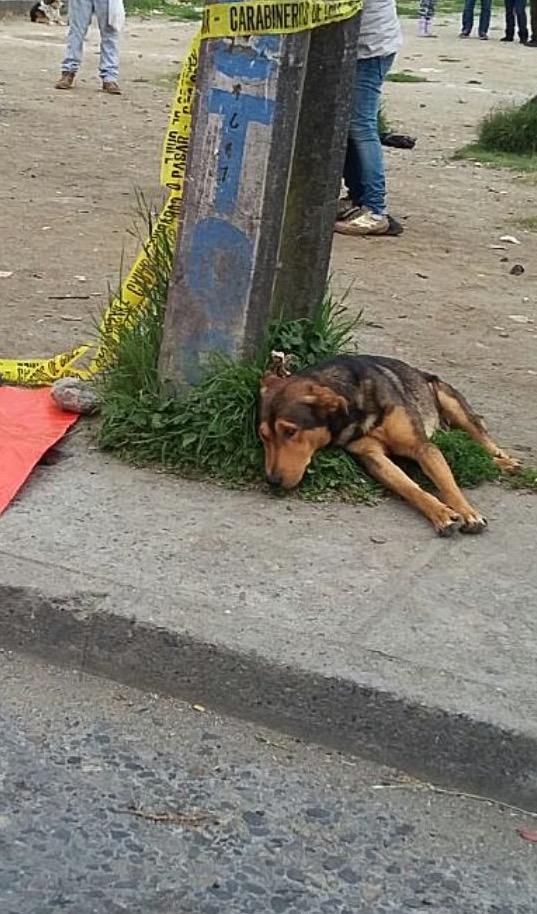 Anjing Bersedih Di Sisi Tuan Yang Telah Mati
