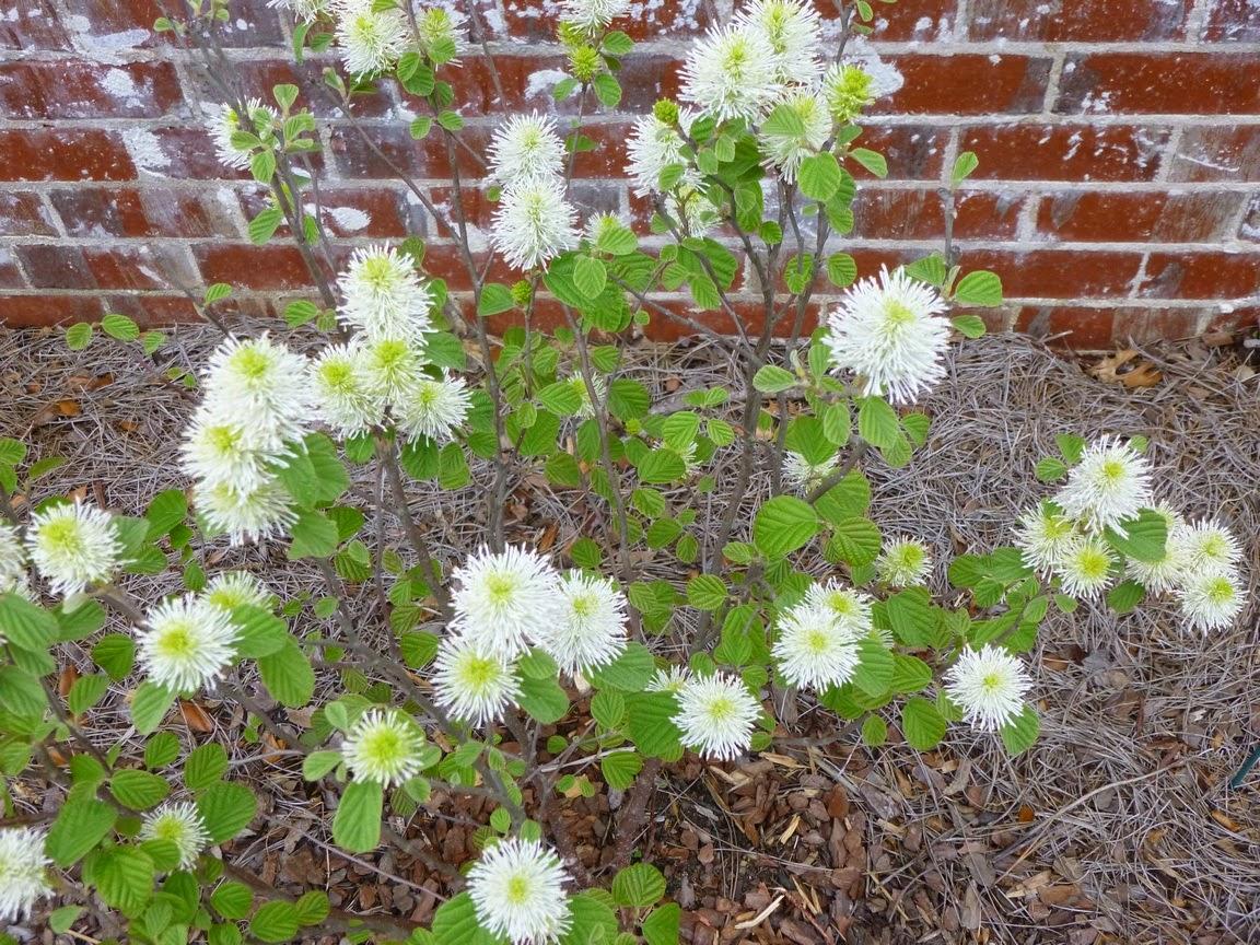 毛坯毛皮盛开。这些花朵是否会在29度的短篇小说中进行短暂的咒语?
