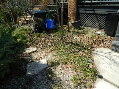 Paul Jung Gardening Services a Toronto Gardening Company Parkdale Spring Yard Cleanup Before