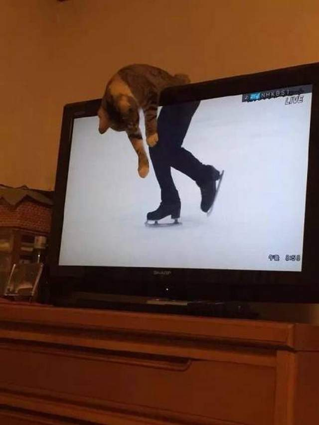 Funny cats - part 249, best cute cat pictures, funny cat images