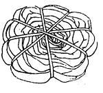 Hippie's Child ~ Teach Yourself Tie Dye: Spiral