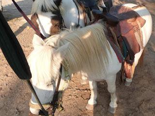 Ponyreiten auf Mallorca