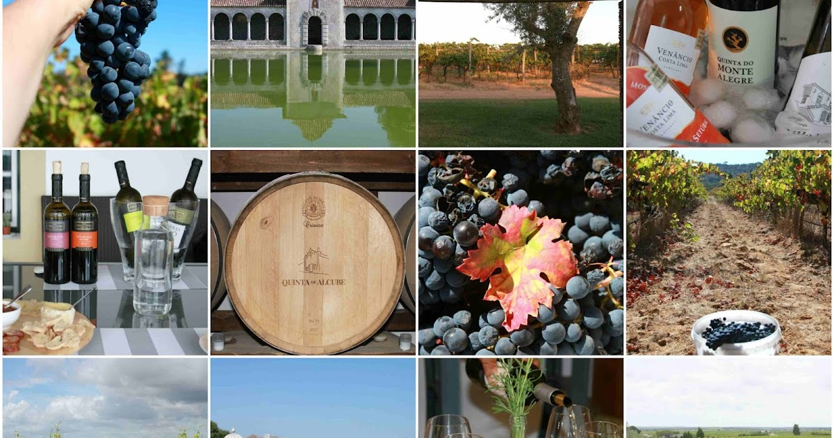 The Wanderer's Gallery | European Wine Tourism Day