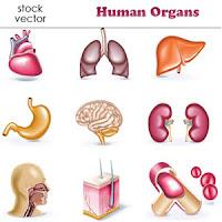 contoh struktur organisasi tingkat organ