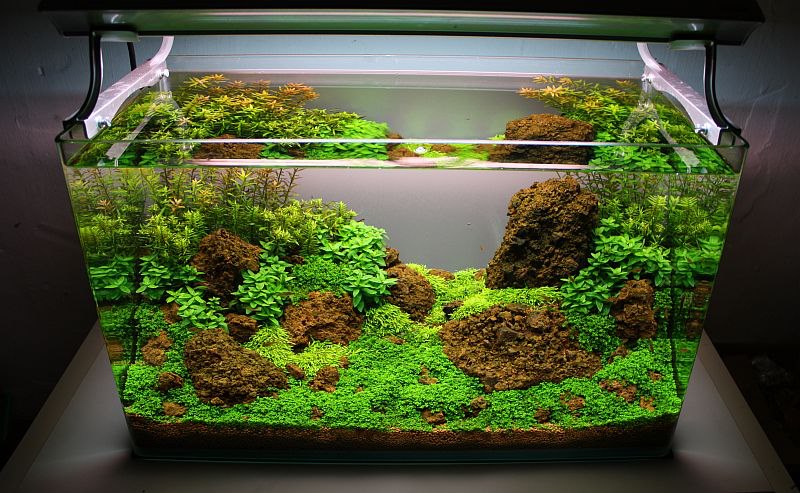 Step By Step Aquascape Layout By Oliver Knott