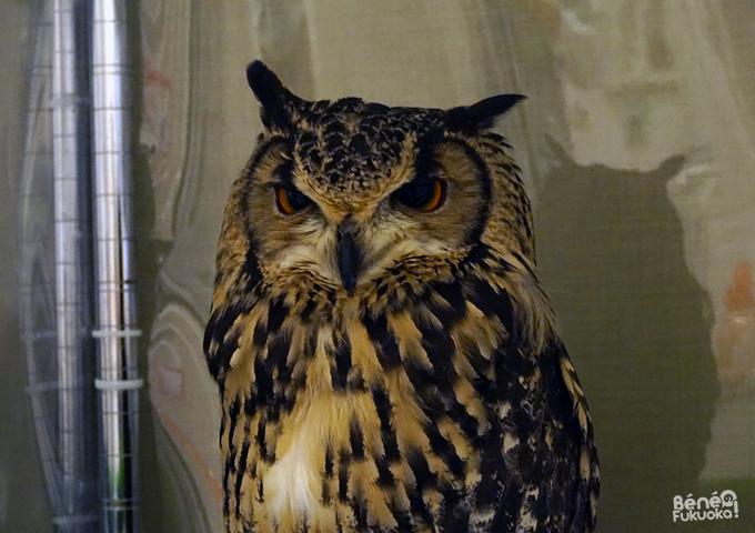 Fukuoka's owl cafe