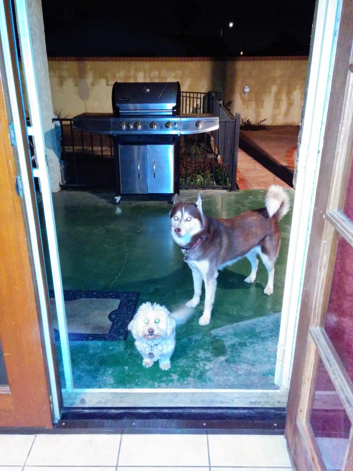 Our dogs know to Wait anytime they go through a door, even at our house