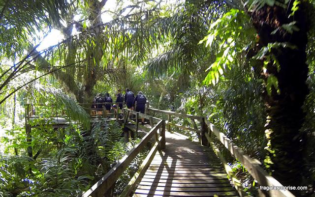 Passarela de madeira na mata leva até a nascente do Rio Sucuri, em Bonito