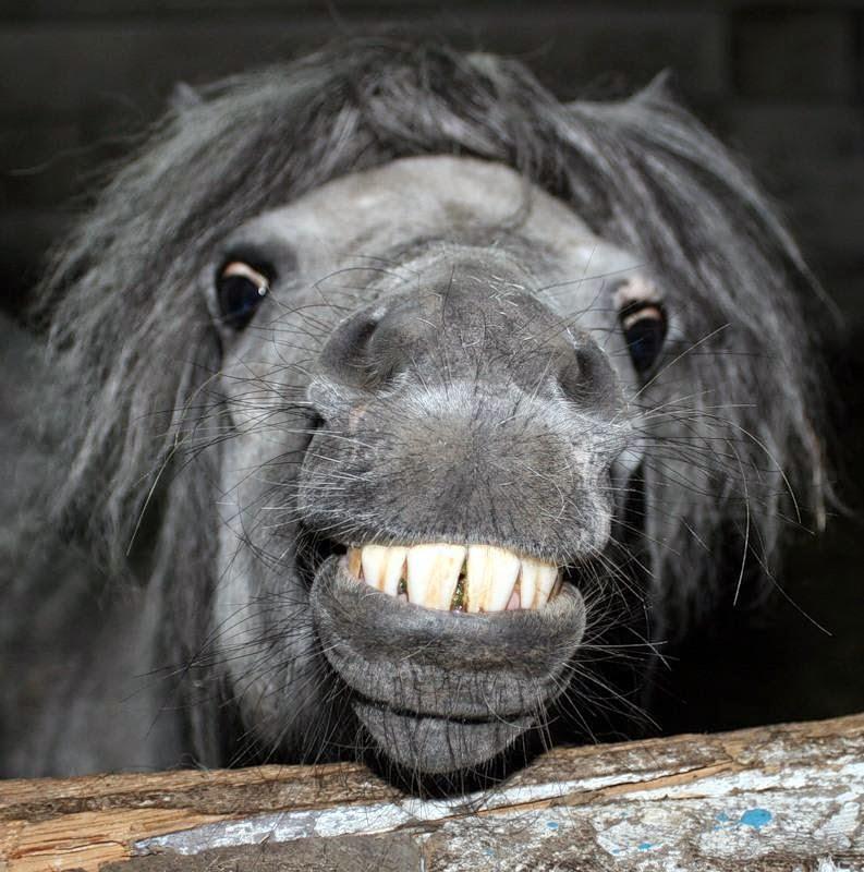 divertida fotografia de caballos