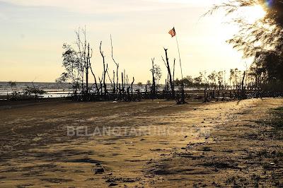 Pohon Bakau Dalam Laut Sesuai untuk Fotografi