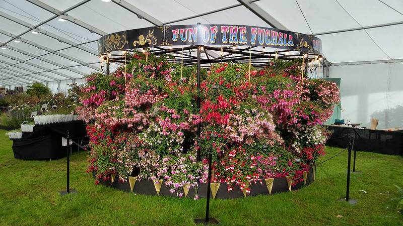 Fuchsia. Floral Marquee. Chatsworth Flower Show 2017