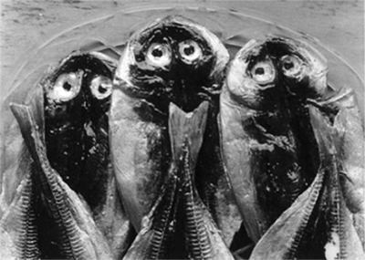 http://kvetchlandia.tumblr.com/post/156835010388/nathan-lerner-three-fish-yugawara-japan