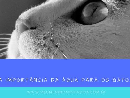 A importância da água para os gatos!