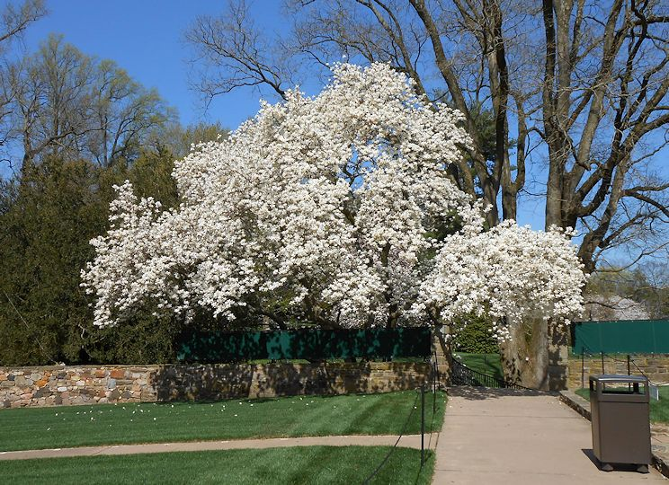 My Virtual Garden Longwood Ga