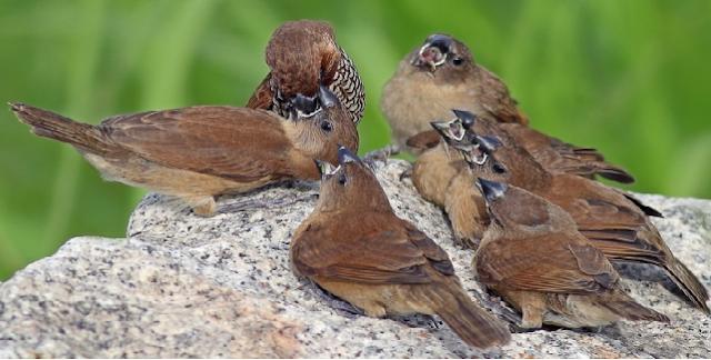 Hanya Karena Burung Pipit dan Semut, Rasulullah Tegur Para Sahabat
