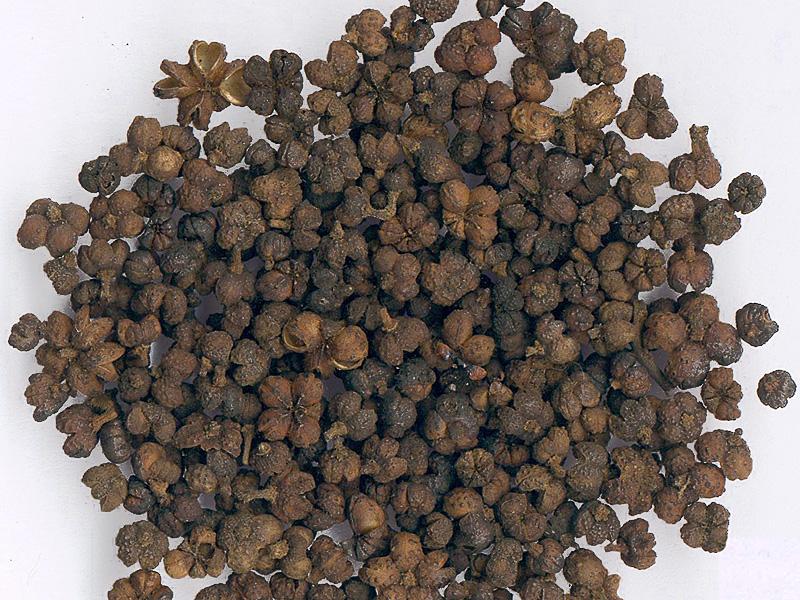 Dried evodia fruit