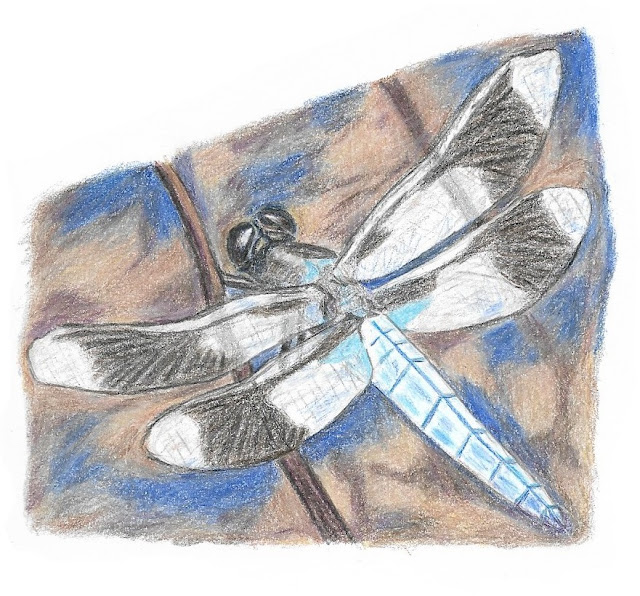Colored pencil dragonfly