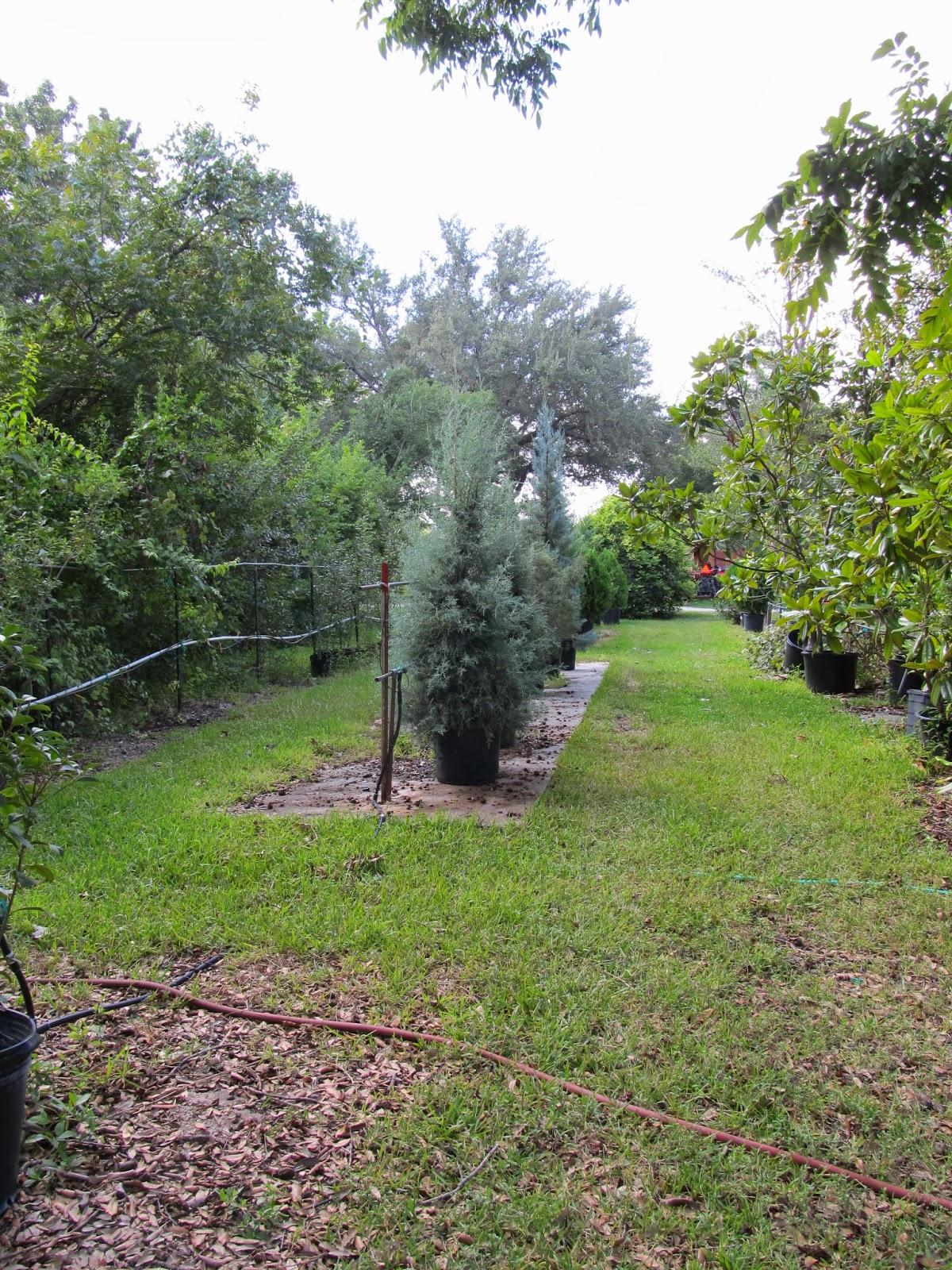 Rock Oak Deer Support Your Independent Nursery Month Fanick S Garden Center