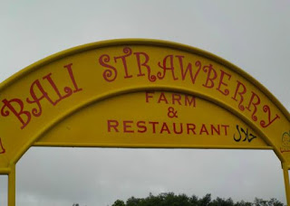 All About Bali Strawberry Farm & Restaurant Bedugul