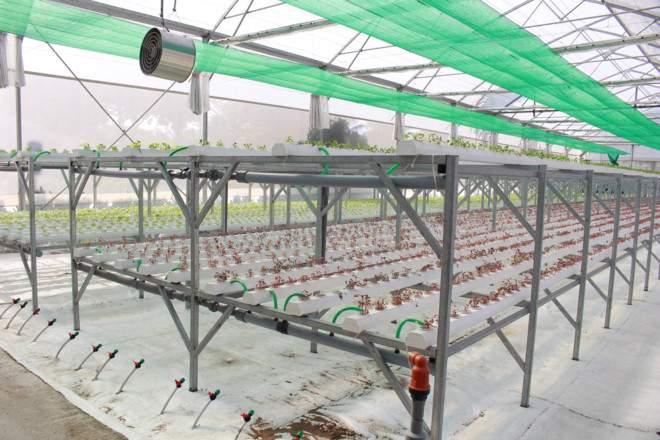 Dùng phần mềm công nghệ để xuống giống và thu hoạch rau - ảnh 4