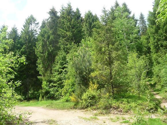 Сколе. Национальный парк «Сколевские бескиды»