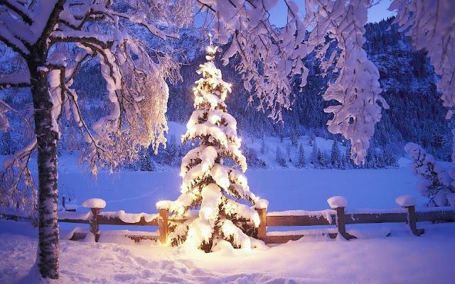 Verlichte kerstboom bedekt met een laag sneeuw
