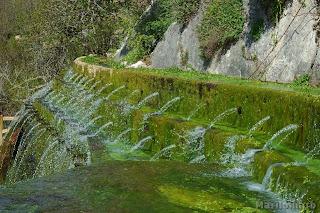 Resultado de imagen para El bosque de ribera del río Guadaíra