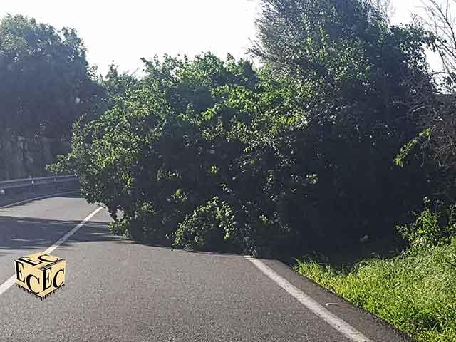 Fotos árboles caídos en Gran Canaria por alerta de viento