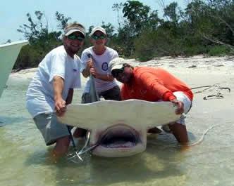 largest hammerhead shark - photo #27