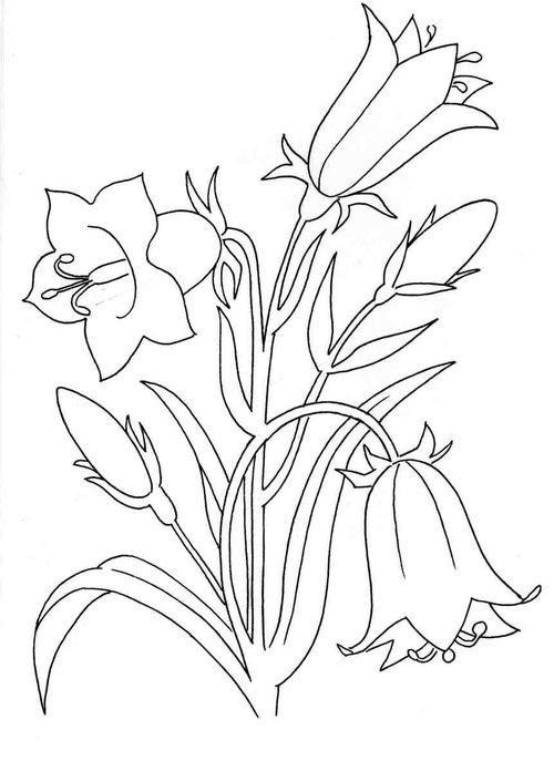 Tranh tô màu bông hoa loa kèn