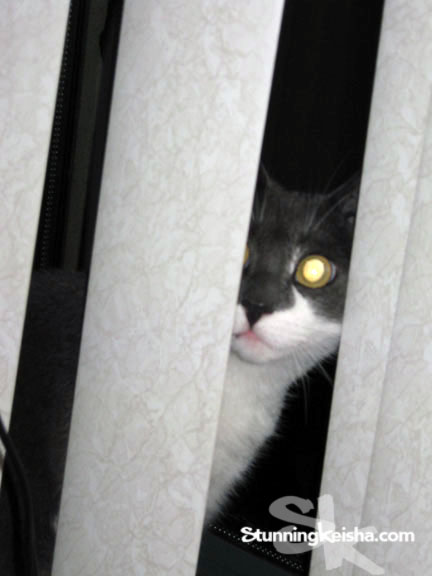 Cat at window with laser eyes