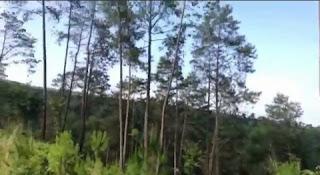 keindahan hutan taman wisata wonoasri seper jatipurno wonogiri