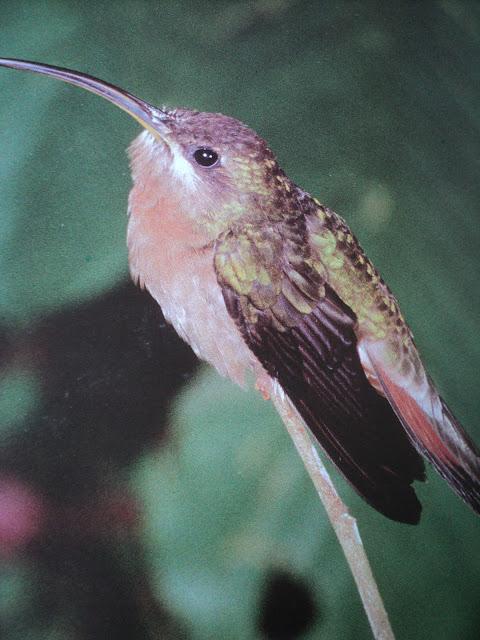 Pássaros, aves
