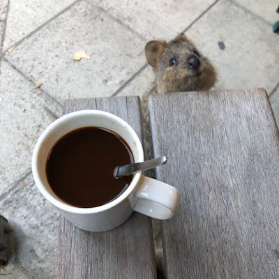 Lustiges Eichhörnchen neben Tasse Kaffee