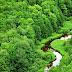 Komitmen Sukanto Tanoto Dalam Pengelolaan Hutan Berkelanjutan Demi Generasi Mendatang