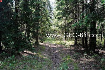 Негорельский лесхоз. Дорога в СТ ''Лесное-Ливье''