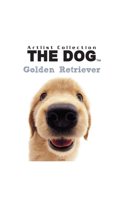 THE DOG Golden Retriever