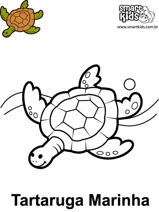 Tartaruga Desenho Para Colorir