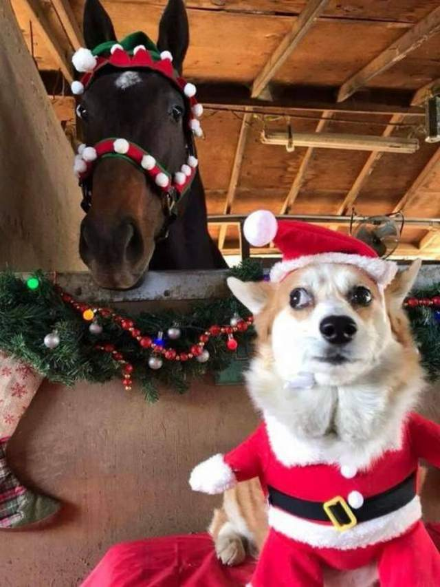 Funny animals of the week - 15 December 2017, adorable animal images, funny animal photos