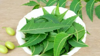 If You Know The Benefits Of Neem, You Will Use It Daily