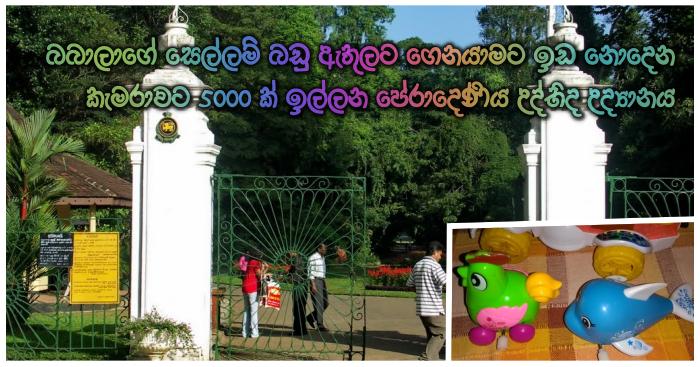 https://www.gossiplankanews.com/2018/09/5000-peradeniya-garden.html#more