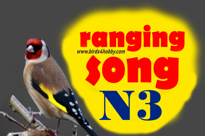 the ranging songs of goldfinch Before Mating number 03