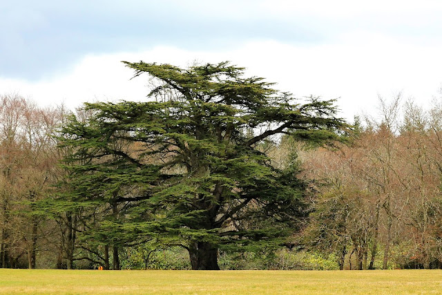 Tree at Emo Court