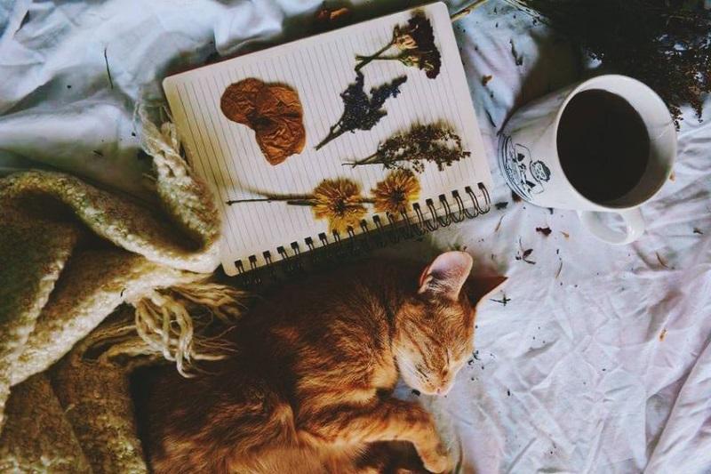 L'automne l'inspiration